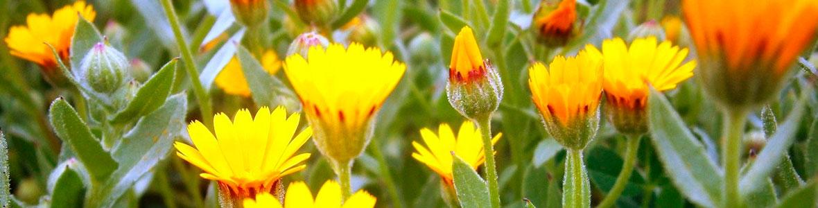 sfeer-homeopathie